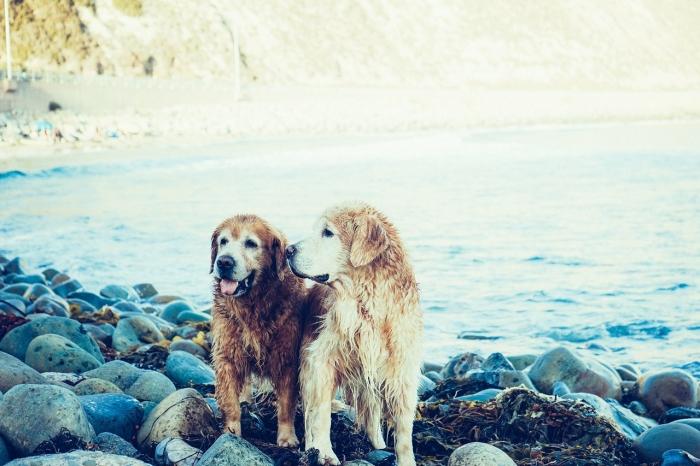 Zdravý trend v krmení psů