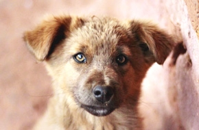 Jsi dobrý přítel svého psa?