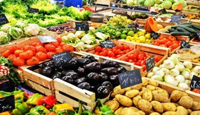 Ovoce A Zelenina Patri Do Krmiva Pro Psy