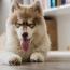 Co ovlivňuje délku psího života